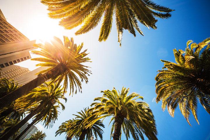 候機室的椰子樹