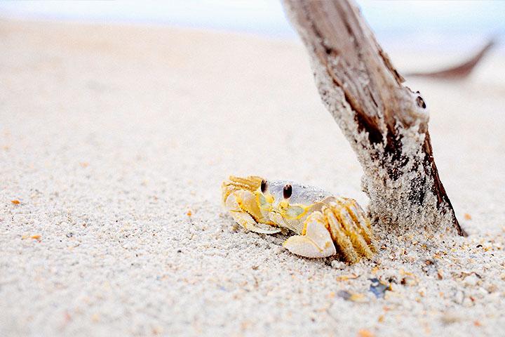 放假,讓我們淨灘去