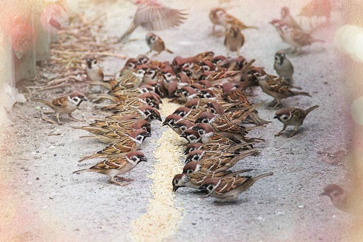 請小鳥吃飯