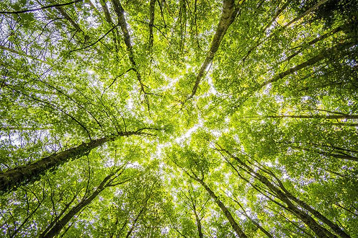 學堂之美〈景觀篇〉:老大樹的小僕人——真如老師的教導