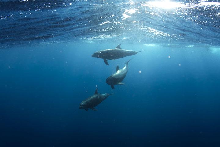 守護海洋,從不拿塑膠袋開始