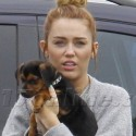 Miley Cyrus' New Pup