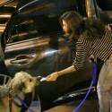 Eva Mendes Takes Ryan Gosling's Dog To The Vet