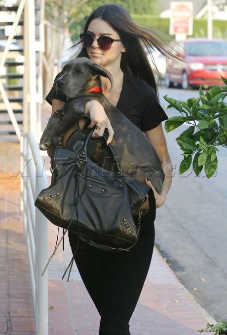 Kendall Jenner  dog purse fred segal jeans reality kardashian