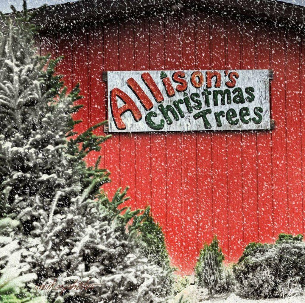 2 Allison's Christmas Trees